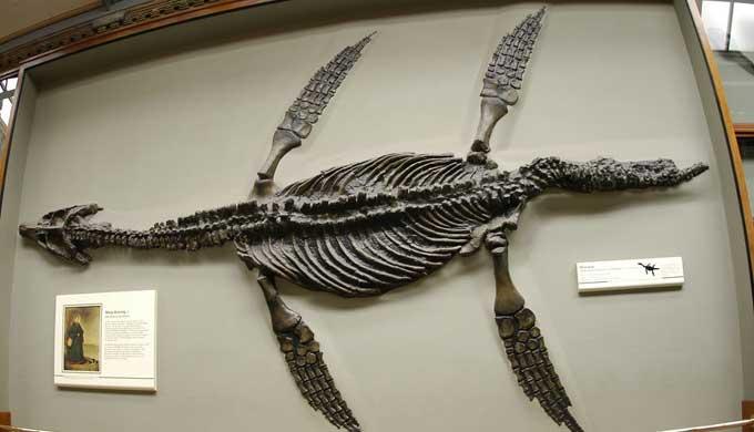 plesiosaure02.jpeg